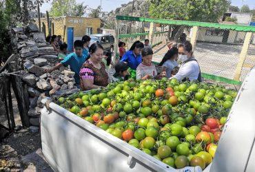 Ante el COVID19,  hicimos llegar 8 toneladas de jitomate a comunidades de Peñamiller